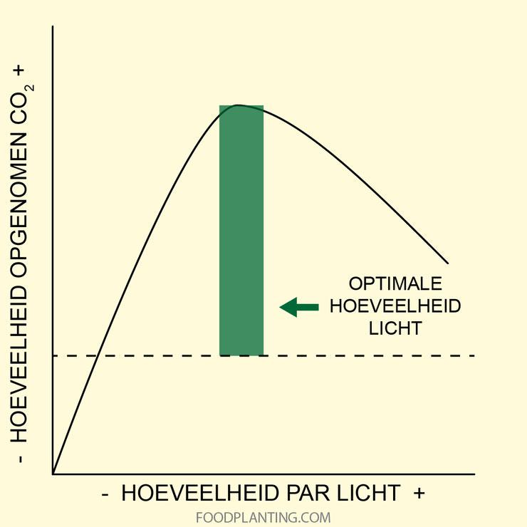 koolstofdioxide, licht, fotosynthese