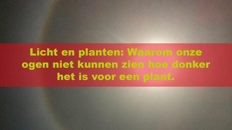 LICHT EN PLANTEN, WAAROM ONZE OGEN NIET KUNNEN ZIEN HOE DONKER HET IS VOOR EEN PLANT