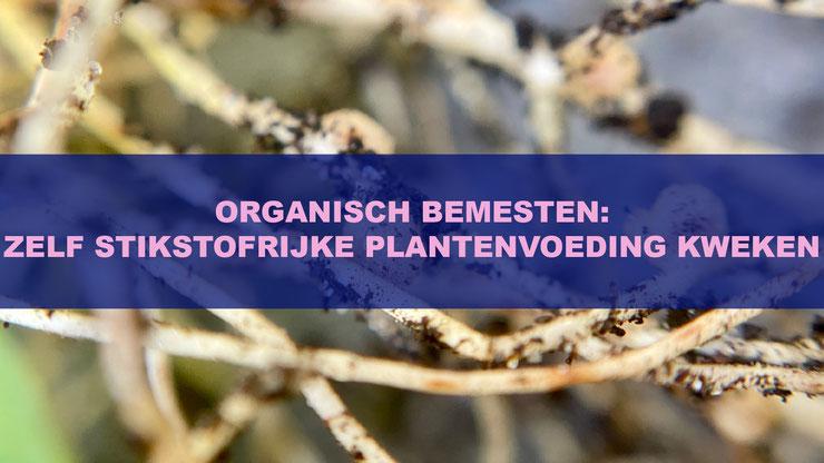 Organisch Bemesten: Zelf Stikstofrijke Plantenvoeding Kweken