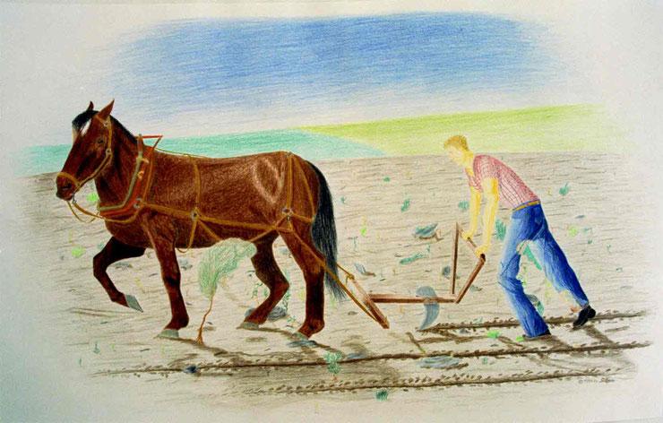 "Bild: ""Der Pflügmann"",Pflug,Pferd,Zeichnung,Bauer,optische Täuschung,Farbstift,Papier,Acker,Doppelbild,Urs Brühwiler,Theres Seiler,David Brandenberger,"