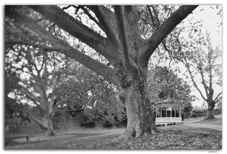 Park mit Baum und Pavillon in Schwarz-weiss