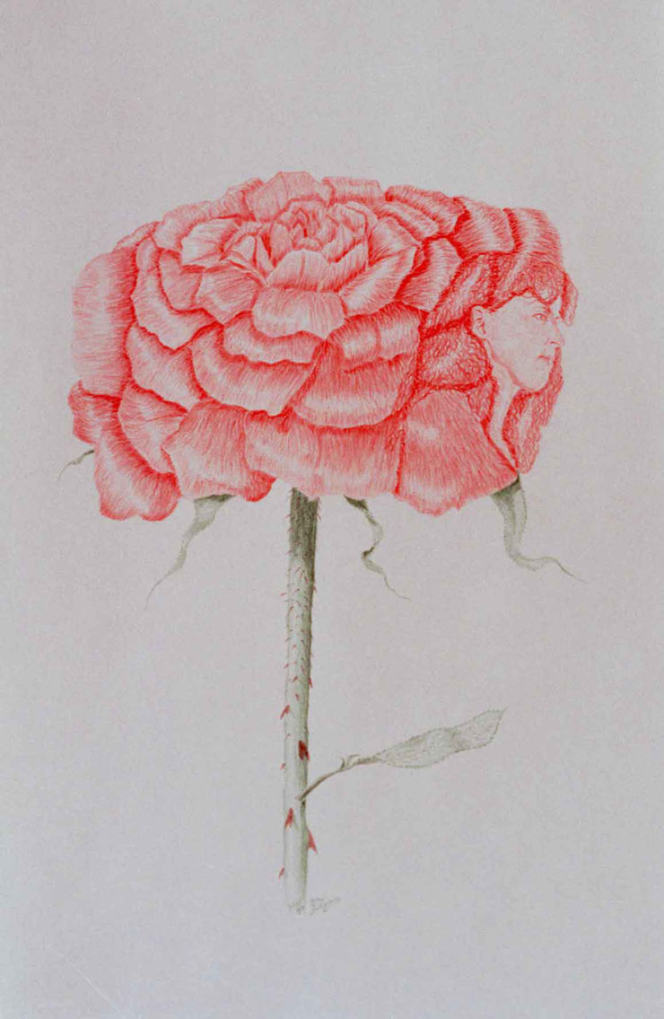 Bild:The Rose,Rose,Charlotte Höglund,Zeichnung,Farbstift,Buntstift,Rot,Papier,Doppelbild,David Brandenberger,