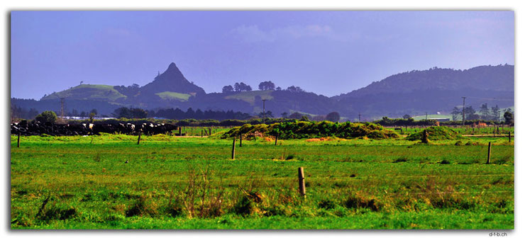 Spitzer Berg hinter Kuhweiden in Northland, Neuseeland.