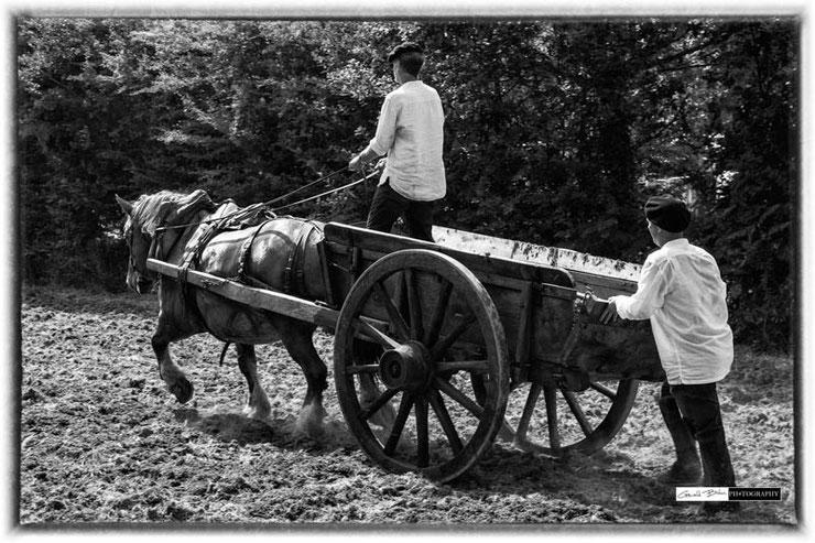 Fête du Maërl à Pont-Callec charrte et son cheval