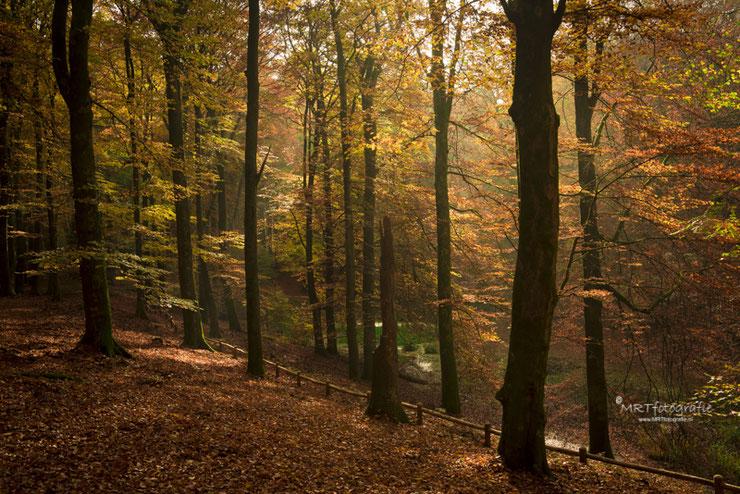 Gouden gloed door de bijna onzichtbare zonnestralen Solse Gat in Speulder Bos