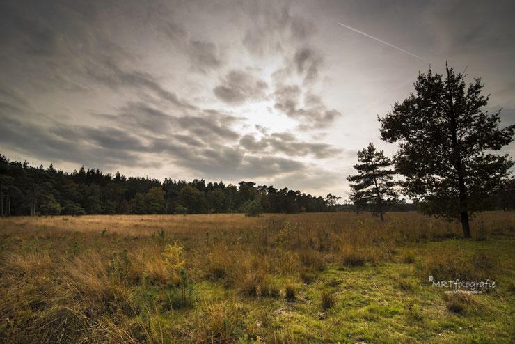 Een open plek in Den Treek-Hensschoten te Leusden. Sluitertijd 1/30 sec., diafragma f/8, ISO 320