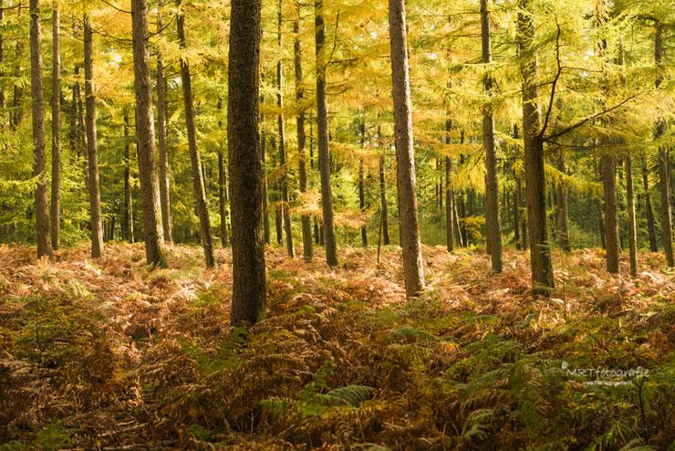 Een gedeelte in een dichtbegroeid bos waar rust vanuit gaat door de varens op de grond                                                                                                                         Sluitertijd 1/125 sec., diafragma F/5.6, ISO 200