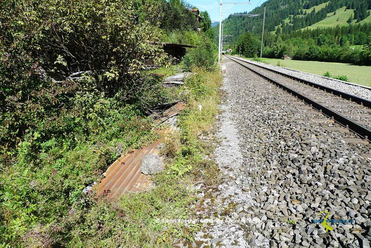 Extensiv gepflegte Verkehrsbegleitflächen beherbergen oft starke Zauneidechsenvorkommen. Eisenbahn- und Strassenböschungen sind häufig auch bedeutende Verbindungskorridore.