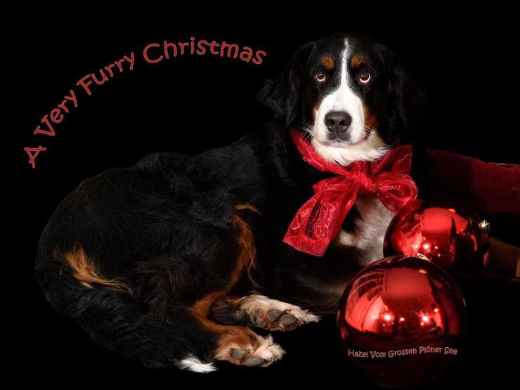 Die brave Hazel wartet auf den Weihnachtsmann