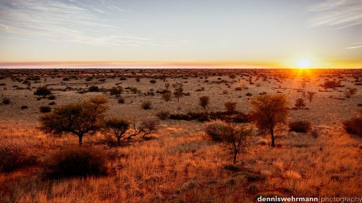 sunrise kalahari desert namibia