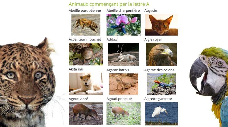 liste des animaux par ordre alphabétique avec des images la lettre A
