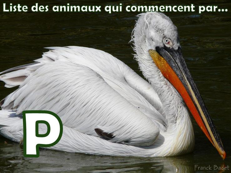 liste des animaux qui commencent par la lettre P