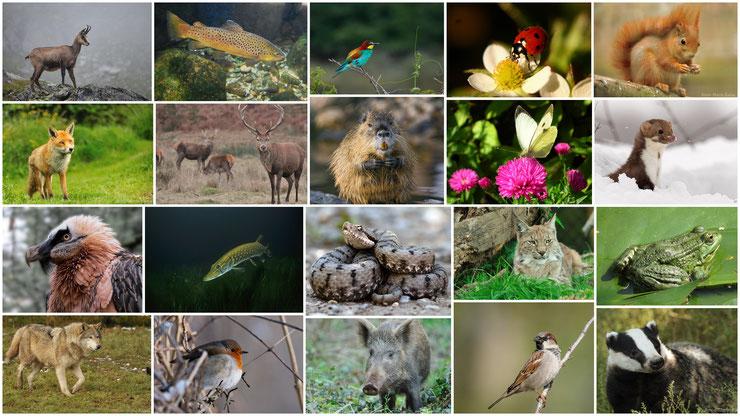 liste des animaux de france mammiferes oiseaux reptiles batraciens insectes poissons