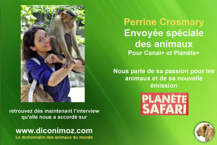interview perrine crosmary canal + planete + safari