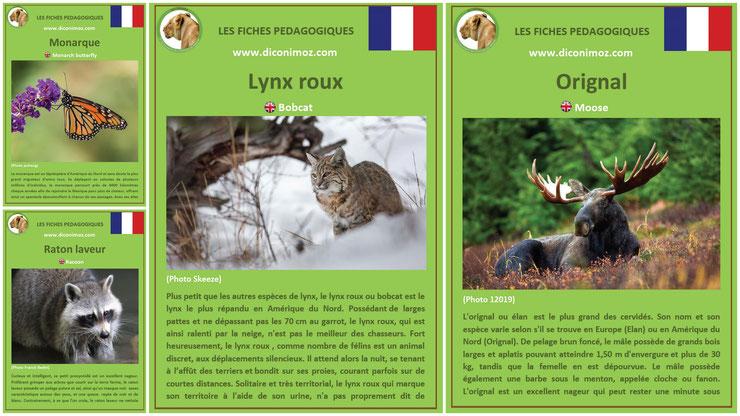 fiches animaux du canada et du quebec pdf a telecharger et à imprimer pour l'ecole ou la maison canadian animals fact orignal raton laveur monarque lynx roux