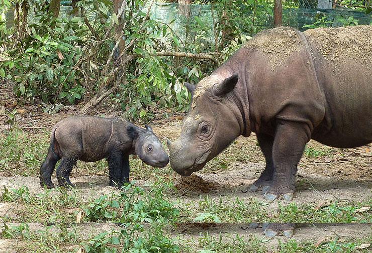 definition du mot rhinocerides vocabulaire des animaux lexique animalier