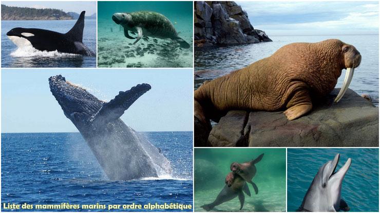 liste des mammiferes marins par ordre alphabetique