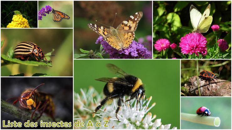 liste des insectes et des arachnides par ordre alphabétique de A à Z