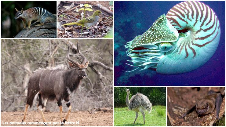 animaux commencant par la lettre N avec photos ou images