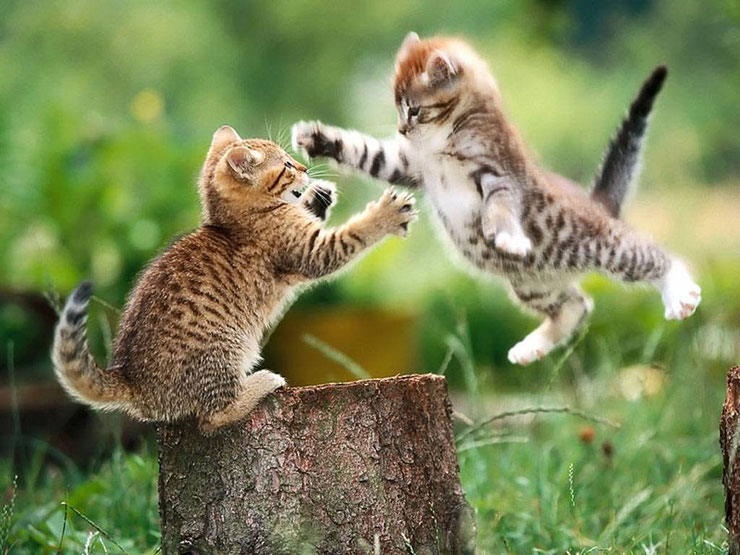 chaton en train de jouer dans la nature kitten plays baby cat