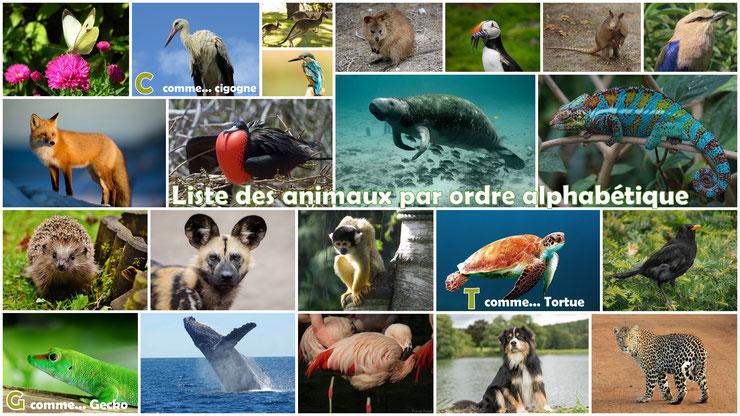 tous les animaux du monde par liste alphabétique de A à Z