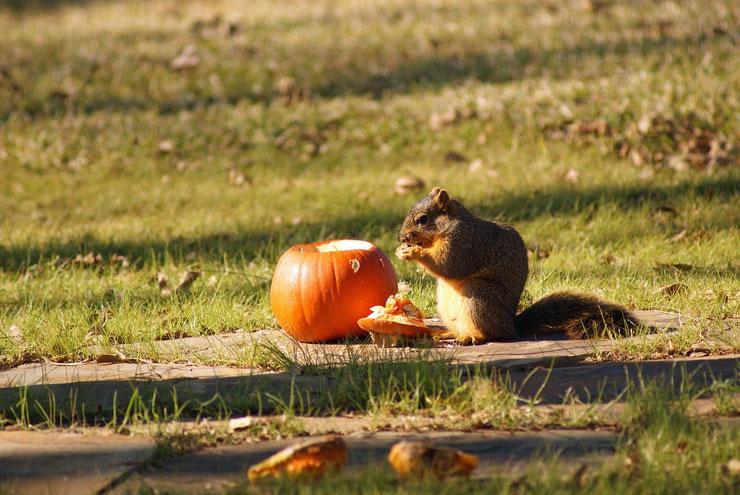 ecureuil halloween
