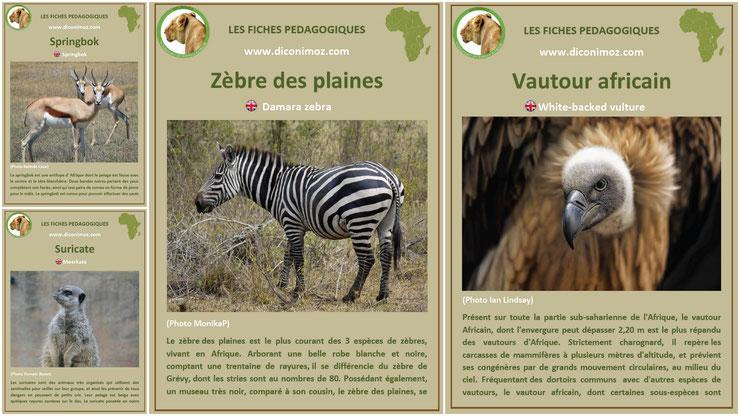 fiches animaux afrique à telecharger et a imprimer pdf download animal fact africa zebre vautour suricate springbok