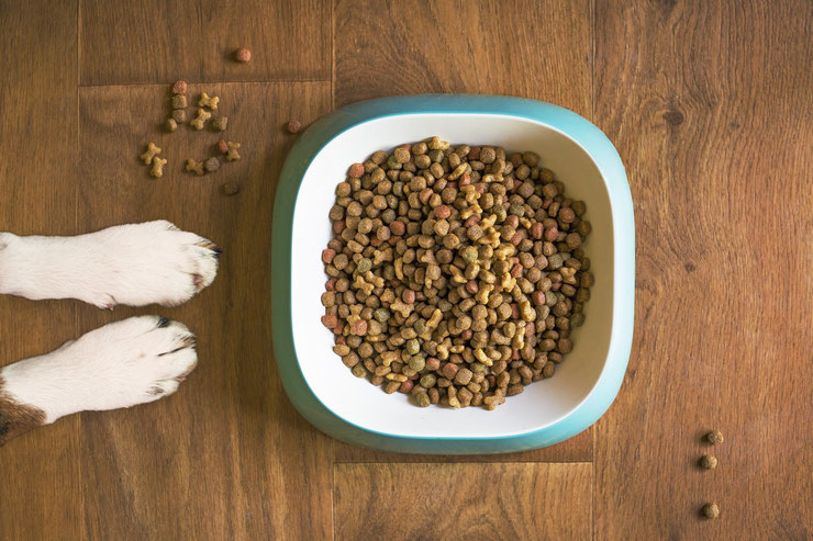 les croquettes sans cereales avis pour ou contre avantages inconvenient guide d'achat conseil boutique
