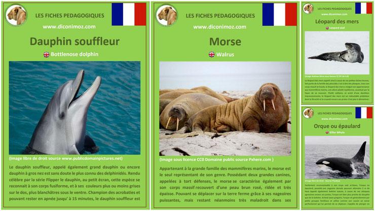 fiches animaux pedagogiques pdf à imprimer et à telecharger devoir maison mammiferes marins grand dauphin souffleur morse orque epaulard leopard des mers