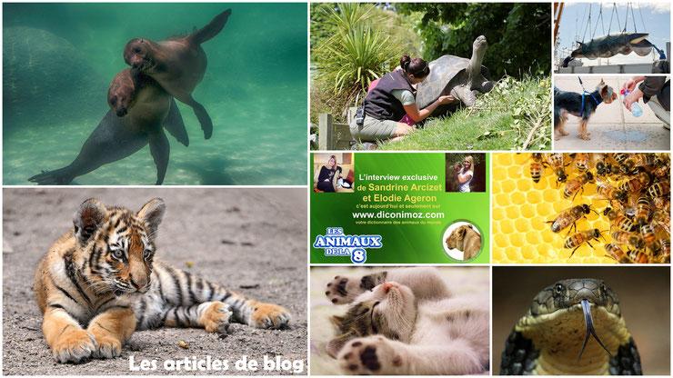 le blog des animaux actualités nouveauté mise a jour du site diconimoz
