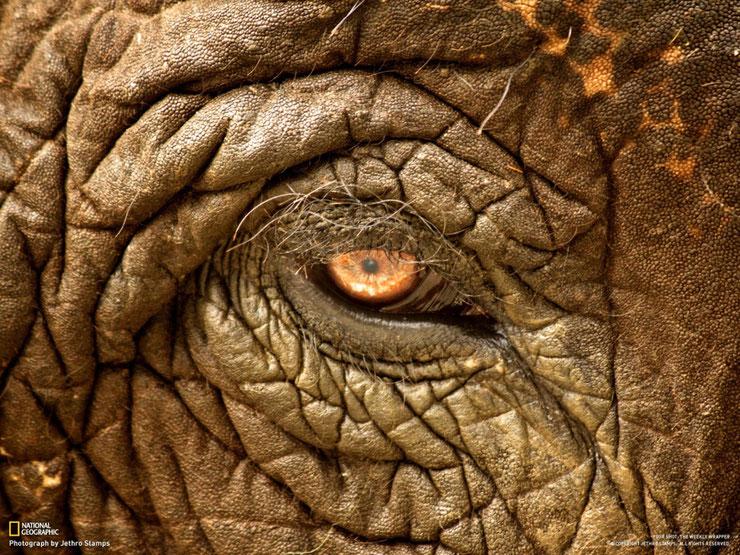 yeux animaux oeil animal devinez jeu game quizz