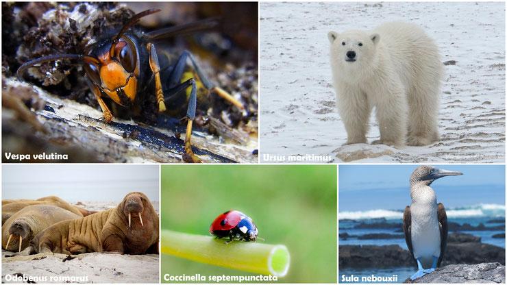 Liste des animaux par noms scientifiques de A à Z
