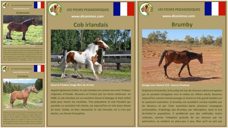 fiche cheval chevaux à telecharger et a imprimer pdf comportement origine caractere robe race ardennais brumby cob irlandais comtois