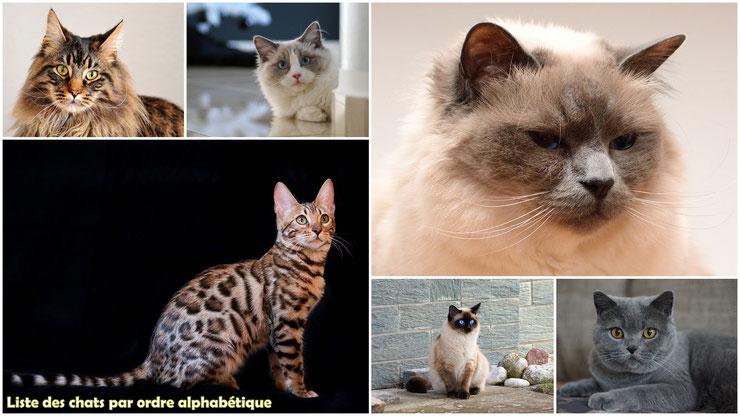 liste des chats par ordre alphabétique