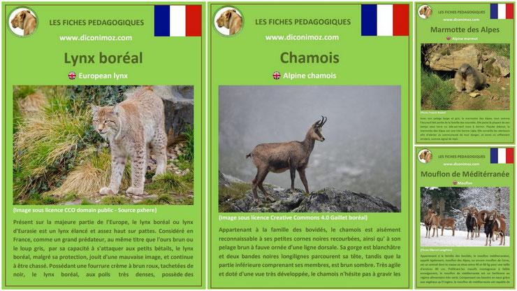fiches animaux montagnes françaises à telecharger et a imprimer pdf download animal fact chamois mouflon lynx boreal marmotte des alpes