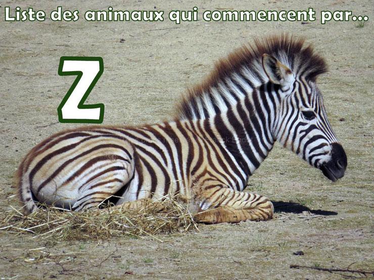 liste des animaux qui commencent par la lettre Z