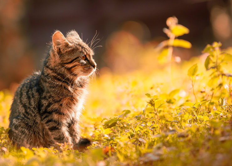 les plus belles photo de chatons bebe chat dans la nature photo hd