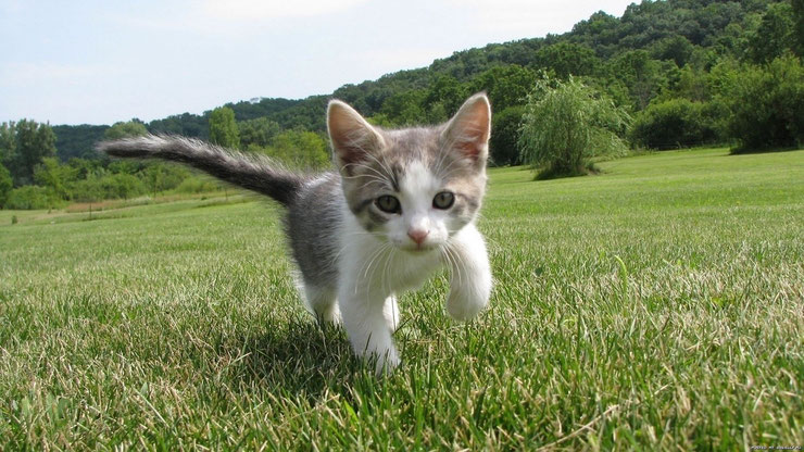 chaton qui coure dans l'herbe adorable mignon petit chat cute baby cat