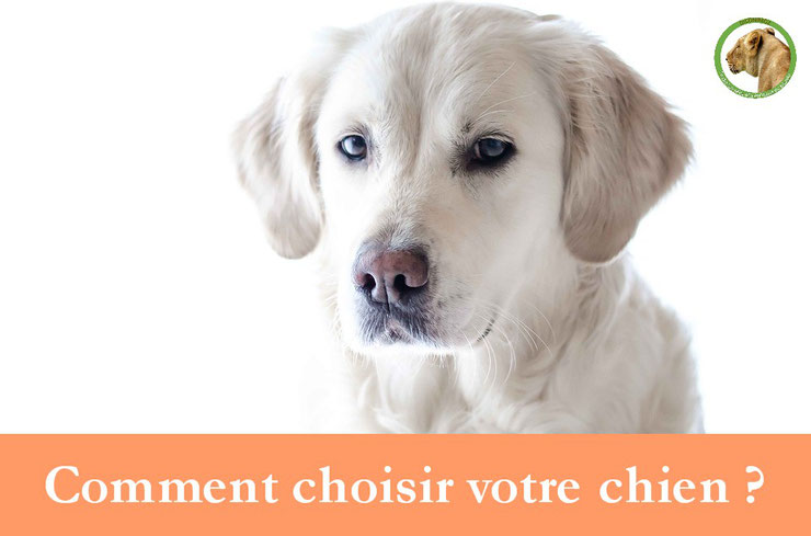 comment choisir son chien astuces conseils