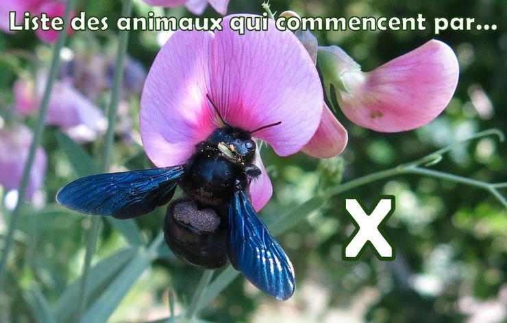 liste des animaux qui commencent par la lettre X