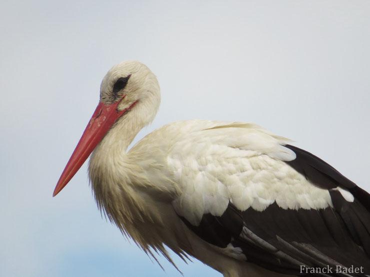 animaux animal oiseaux