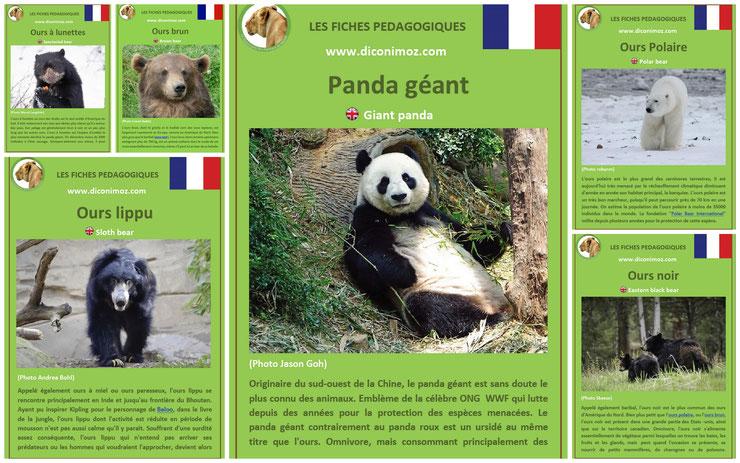 fiches animaux pdf ursides ours et panda à telechargez et a imprimer pour l'ecole ou la maison