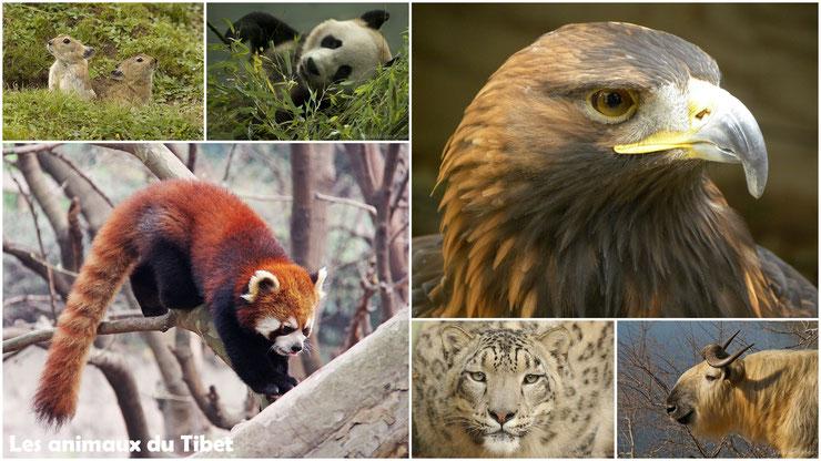 liste des animaux du tibet thematique diconimoz
