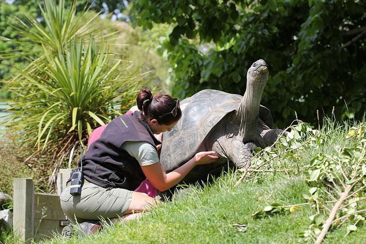 comment devenir soigneur animalier info fiche metier animaux parc animalier