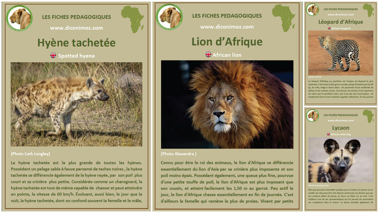 fiches animaux afrique à telecharger et a imprimer pdf download animal fact africa lion lycaon leopard panthere hyene
