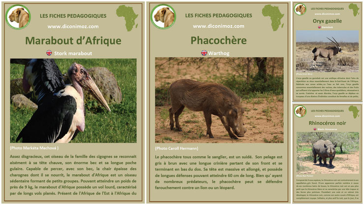 fiches animaux afrique à telecharger et a imprimer pdf download animal fact africa marabout phacochere oryx gazelle rhinoceros noir