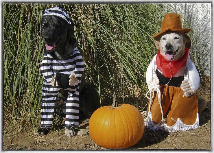 déguisement animaux halloween