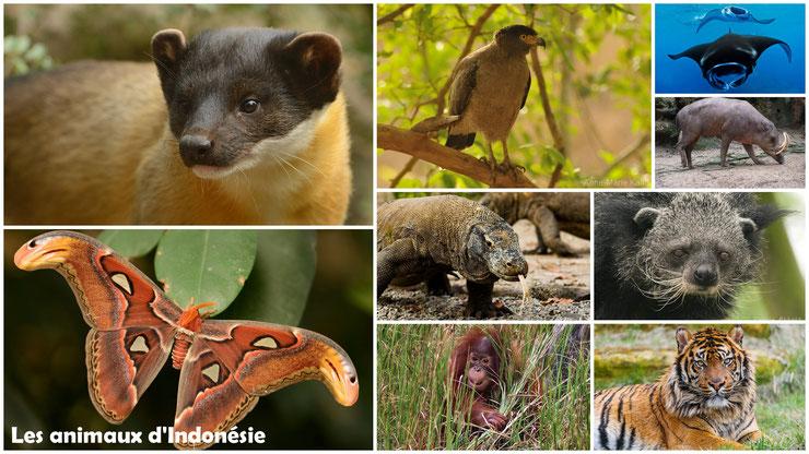 liste des animaux d'indonesie