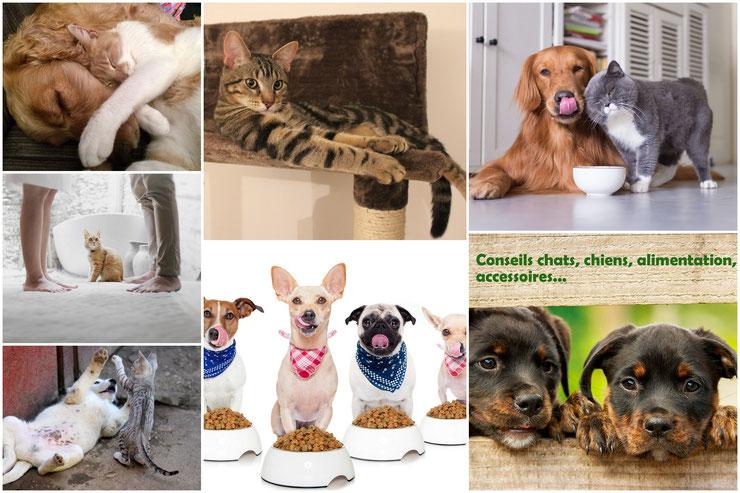 conseils chiens chat alimentation accessoires boutique soins croquettes pates arbre a chat litiere niche laisse jouet barf