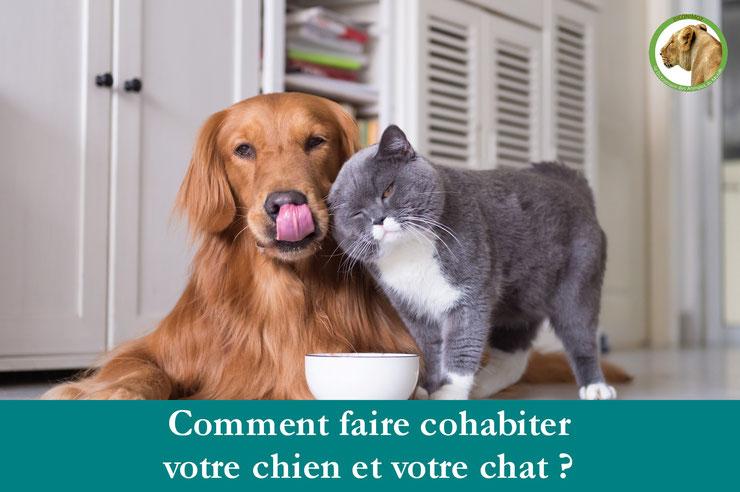 cohabitation entente entre les chiens et les chats comme comment les faire cohabiter